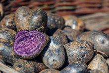 Black Vegetables For Your Garden Purple Potato