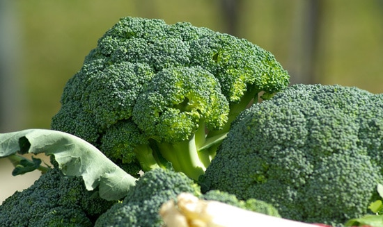 Cruciferous Vegetables Broccoli
