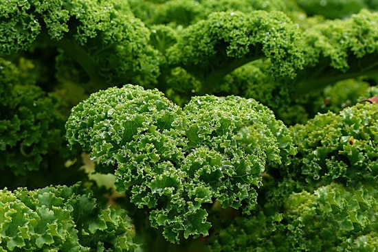 Cruciferous Vegetables Kale