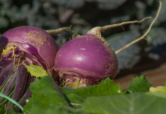 Cruciferous Vegetables Turnips