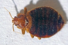 Can Bed Bugs Live Outside 4