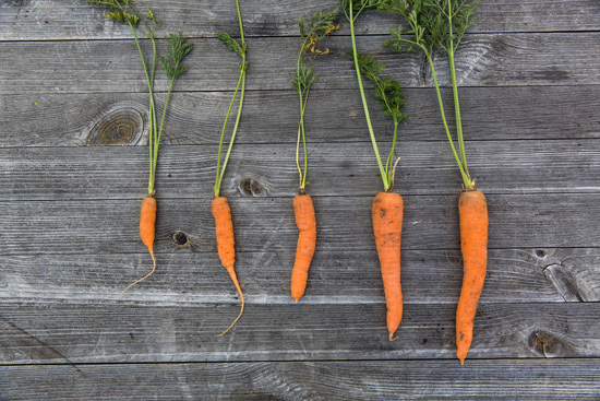Easy Vegetables To Grow Indoors Carrots