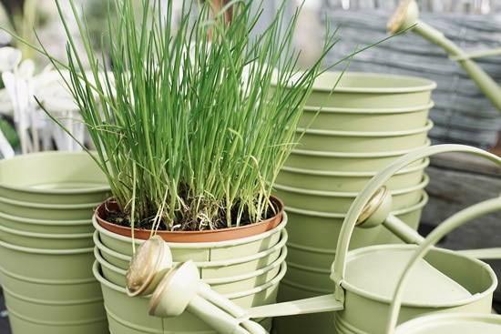 Easy Vegetables To Grow Indoors Chives