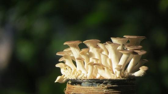 Easy Vegetables To Grow Indoors Mushroom