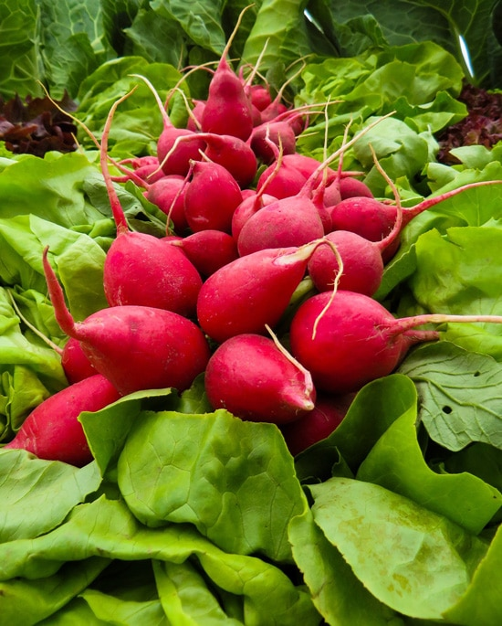 Frost Tolerant Vegetable Plants Radish