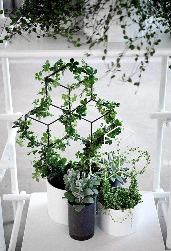 How Fast Does Ivy Grow Seway Garden Metal Trellis