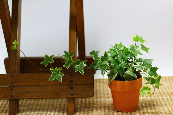Pothos Easy To Propagate Houseplants