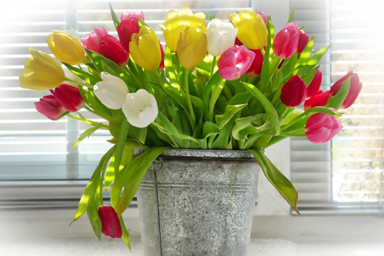 Tulips Full Sun Container Flowers