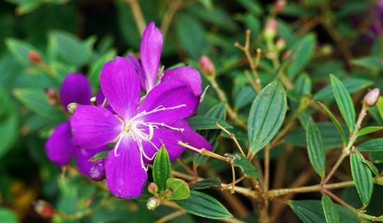 Delphinium Pink Perennials
