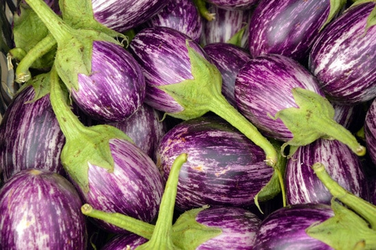Eggplant Ornamental Vegetable Plants