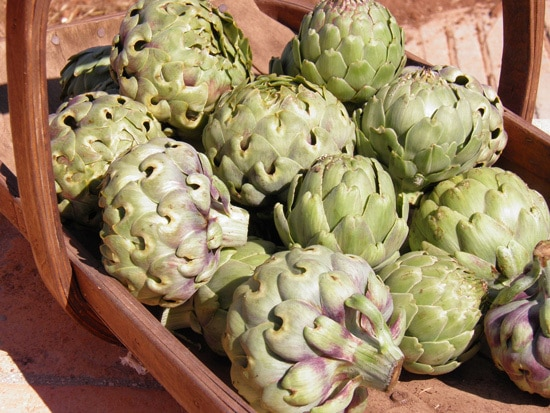Globe Artichokes Ornamental Vegetable Plants 2