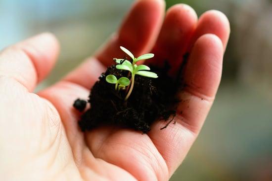 When Do I Put My Seedlings Under Light 1