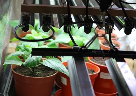 When Do I Put My Seedlings Under Light 3