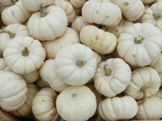 Baby Boo Small Pumpkin Varieties You Can Easily Grow