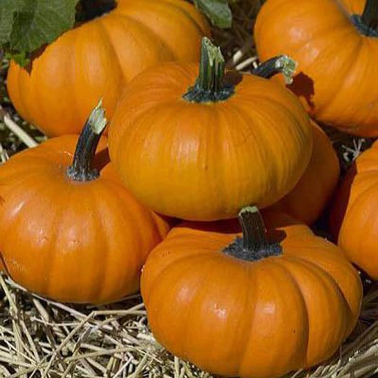 Bumpkin Small Pumpkin Varieties You Can Easily Grow