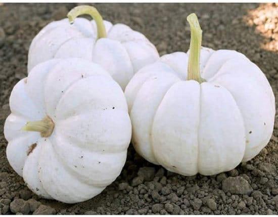 Gooligan Small Pumpkin Varieties You Can Easily Grow
