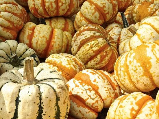 Hooligan Small Pumpkin Varieties You Can Easily Grow