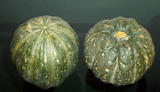 Kabocha Small Pumpkin Varieties You Can Easily Grow