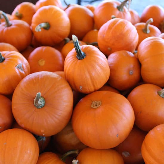 Wee B Little Small Pumpkin Varieties You Can Easily Grow