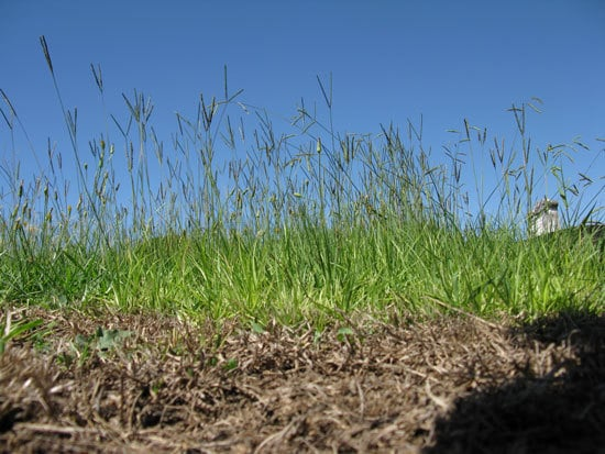 How To Get Rid Of Bahia Grass 2