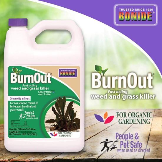 Bonide BND7465 Burnout Concentrate What Kills Clover But Not Gras