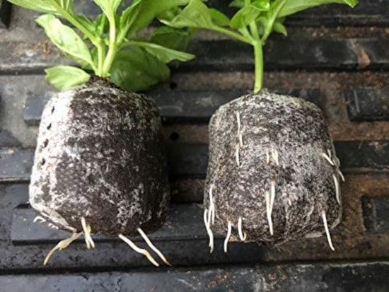 MAXIROOT Organic Rooting Envirocann Hormone Best Rooting Hormone 2
