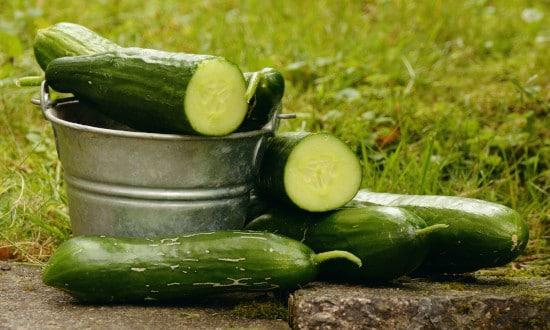 Cucumber Tall Vegetable Plants