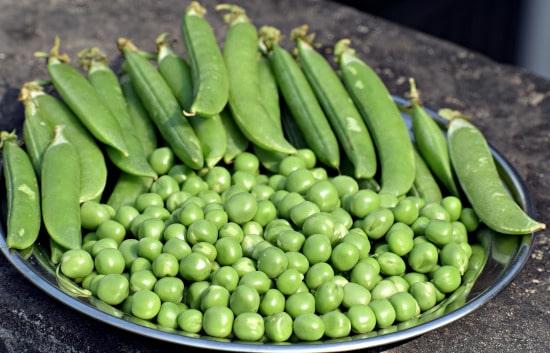 Peas Tall Vegetable Plants