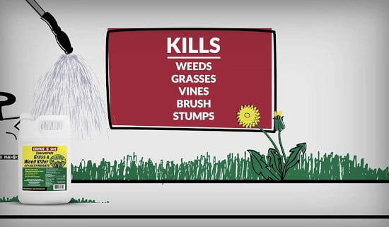 Compare N Save 75324 Herbicide How To Get Rid Of Foxtails