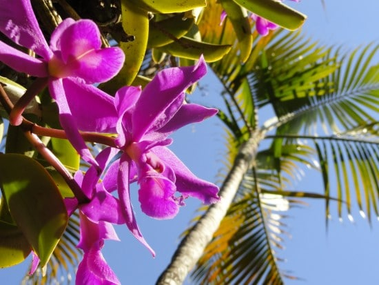 How Long Do Orchid Blooms Last