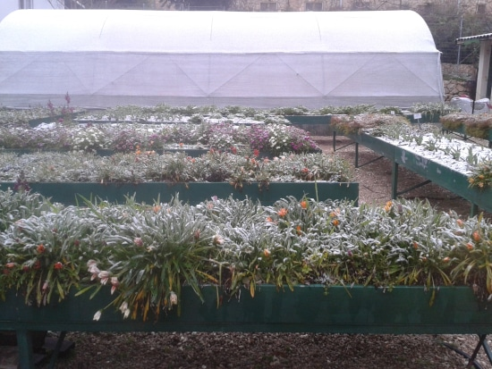 How To Cover Plants For Frost
