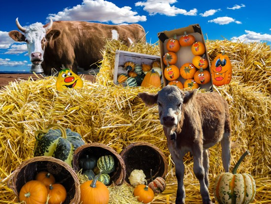 Cows What Animals Eat Pumpkins And Their Benefits