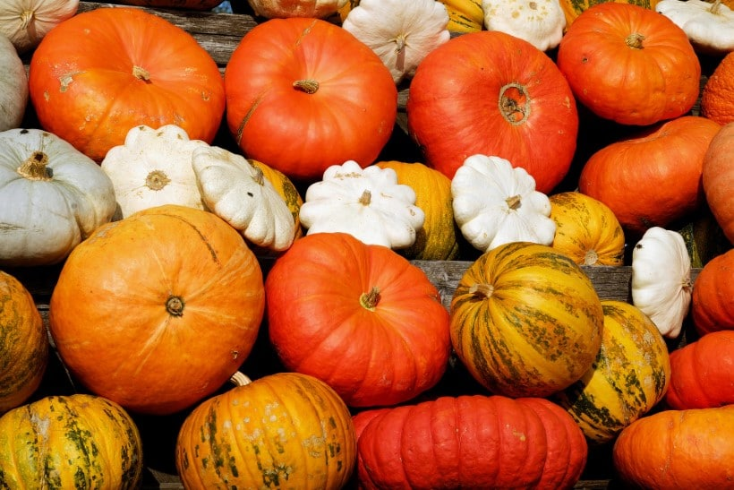 Are All Squashes Edible 2