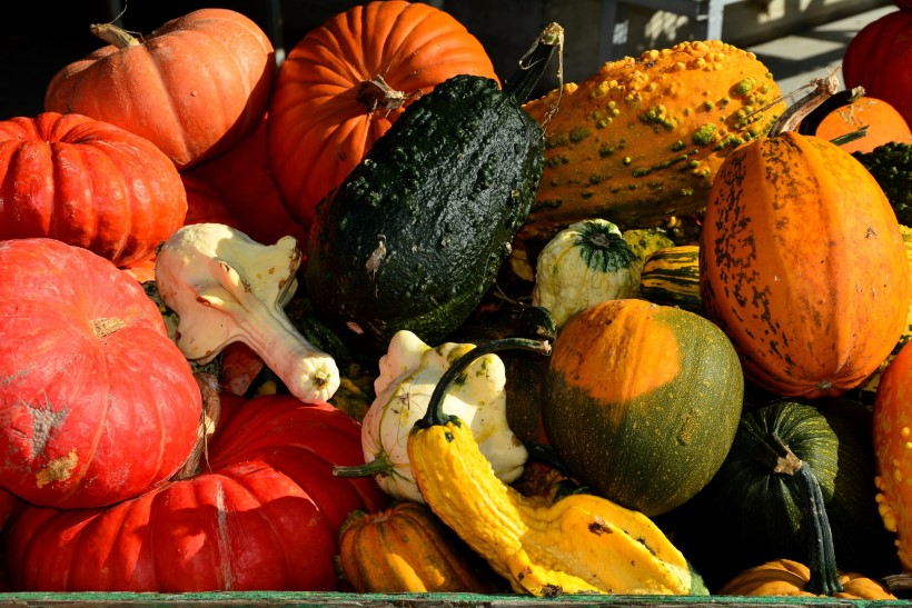 Are All Squashes Edible 3