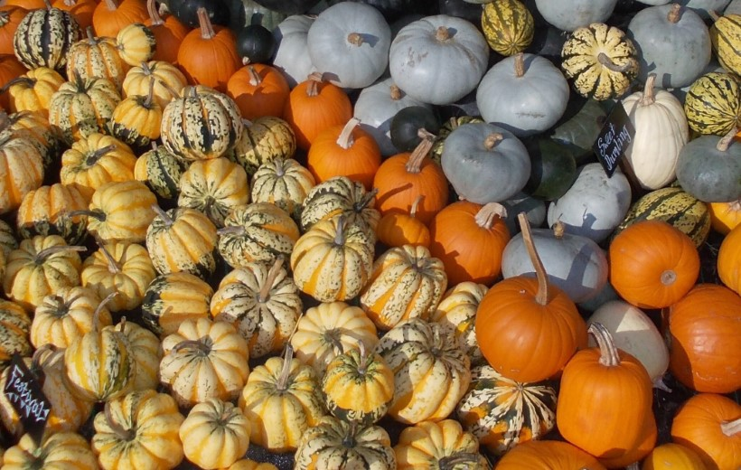 Are All Squashes Edible