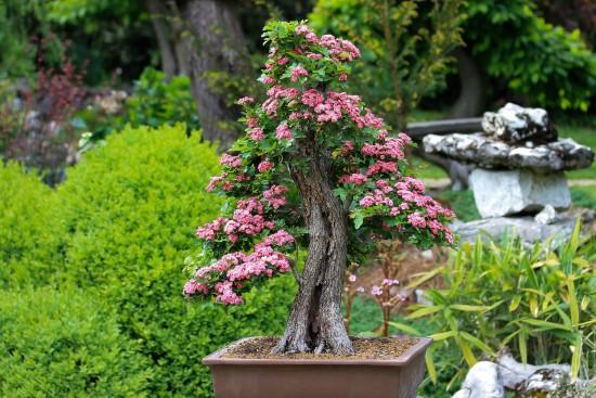 Bonsai Best Terrarium Plants for Your Home