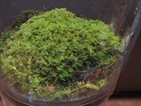 Moss Best Terrarium Plants for Your Home