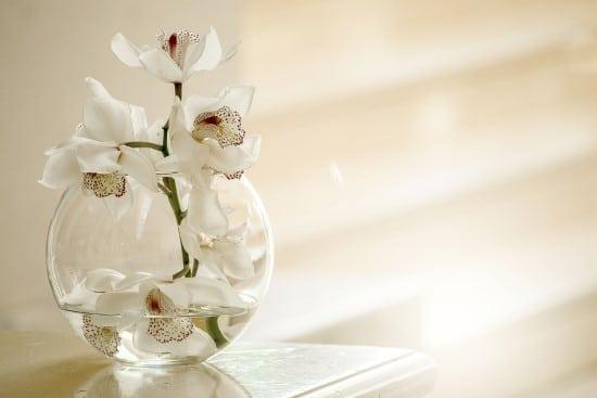 Orchids Best Terrarium Plants for Your Home