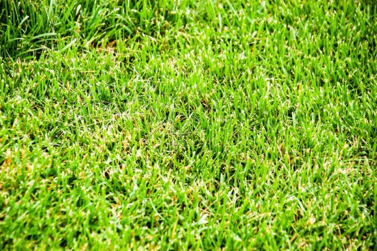 What Temperature Does Grass Stop Growing