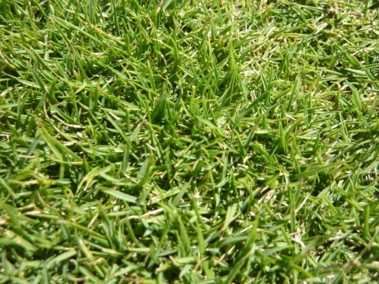 When To Plant Zoysia Grass Seed 1