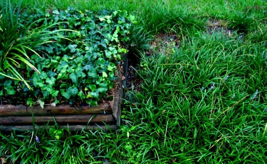 When to plant Bermuda grass seed