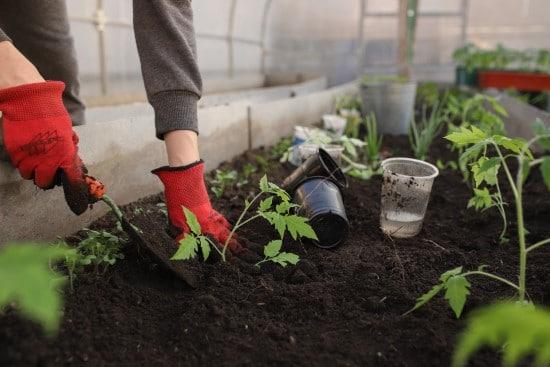 How To Acidify Soil