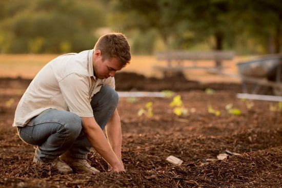 How To Apply Mulch What Is Mulch Used For