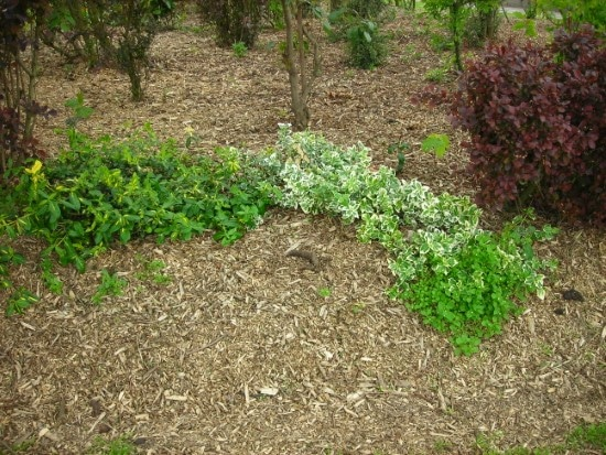 Is Mulch Good For Gardens 1