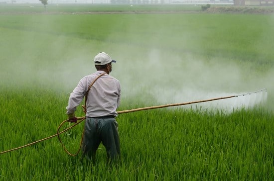 What Do Herbicides Kill