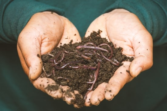 What Do Worms Eat