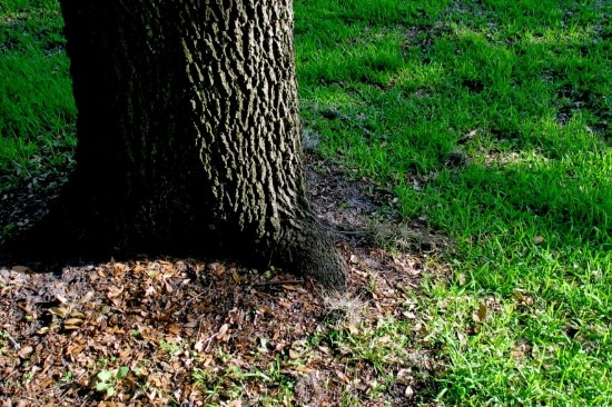 What To Do When Grass Wont Grow Under Trees