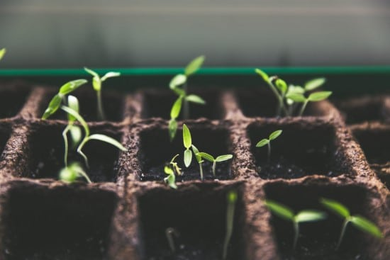 When To Remove Seed Germination Blanket 2