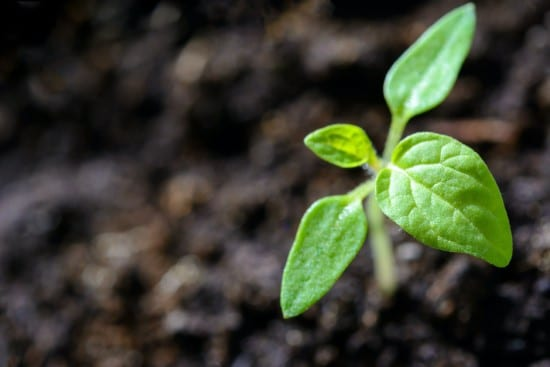 When To Remove Seed Germination Blanket